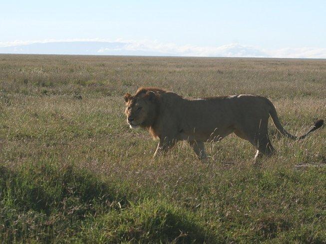 3 Days Short Wildlife Safari in Tanzania