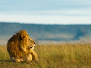 7 Days Breathtaking Safari in Lake Manyara, Serengeti, and Ngorongoro, Tanzania