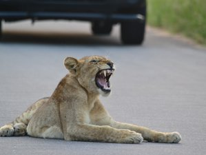 3 Days Classic Southern Kruger Safari in South Africa