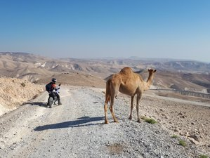 4 Day Adventure Beyond Time: Guided Motorcycle Tour from the Judean Desert to Arava