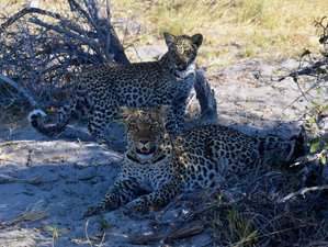 11 Days Leopard Trail Safari in Botswana