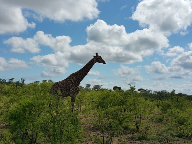 5 Days Adventure Safari in South Africa