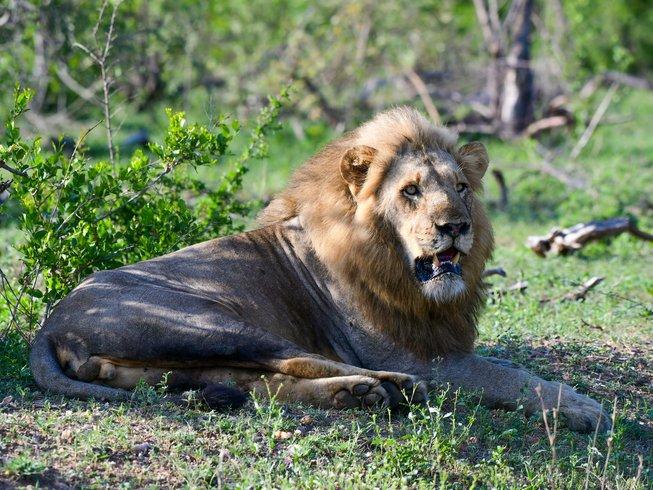 5 Days Ultimate Kruger National Park Safari South Africa