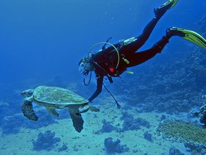 5 Day Beginners' Snorkeling and Diving Camp in Pigeon Island and Trincomalee, Sri Lanka