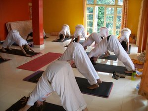6 Weeks 300-Hour Yoga Teacher Training in Dharamsala, India