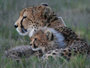 5 Days Garden Route + Private Game Reserve Safari in South Africa