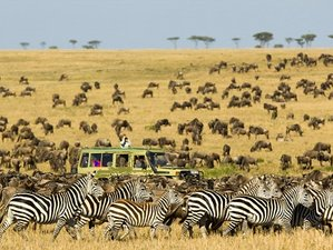 4 Days Budget Tanzania Great Migration Safari in Serengeti National Park and Ngorongoro Crater