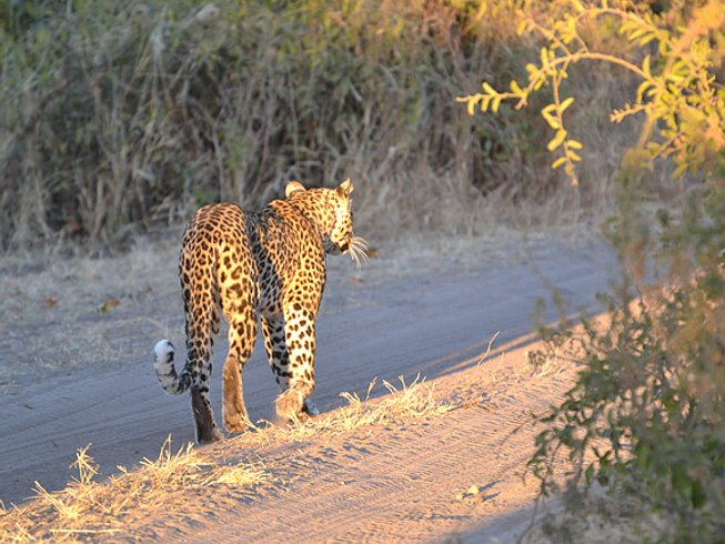 8 Days Camping Safari in Botswana