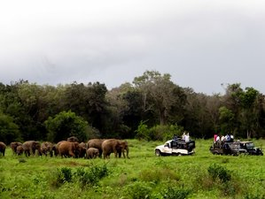 10 Day Special Jeep Safari Sri Lanka