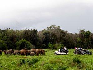 10 Day Special Jeep Safari Sri Lanka