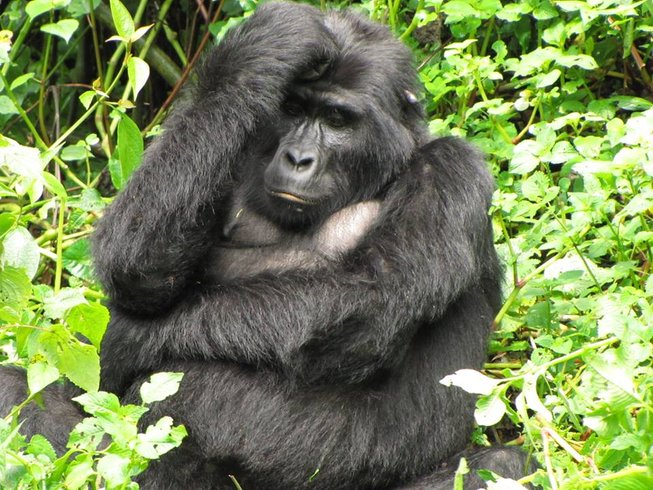 3 Days Gorilla Tracking Safari in Rwanda