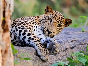 8 Day Adventure and Wildlife Tour in Sri Lanka