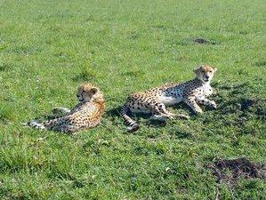 8 Days Stunning Safari in Kenya and Tanzania