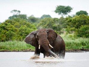 5 Days Kruger National Park Big Five Safari in South Africa