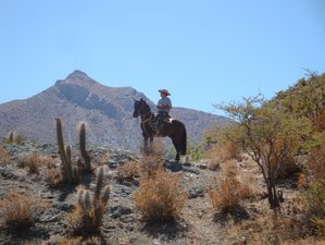 4 Day Andean Wilderness Horseback Riding in Ovalle, Coquimbo Region