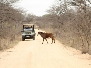 4 Days Wildlife Safari in Kruger National Park, South Africa