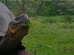 7 Day Galapagos National Park Yacht and Land Wildlife Adventure