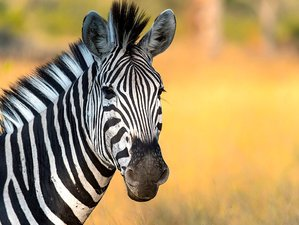 5 Days Tarangire, Ngorongoro Crater, Serengeti, and Mto wa Mbu Lodge Safari in Tanzania