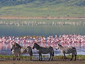 2 Days Camping Safari in Lake Manyara National Park and Ngorongoro Crater, Tanzania