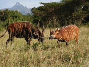 4 Days Private Safari in Samburu Game Reserve and Ol Pejeta Conservancy, Kenya