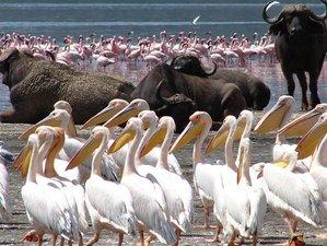 6 Days Classic Safaris in Kenya, East Africa
