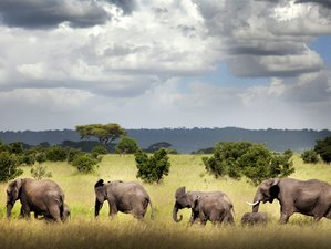4 Days Serengeti National Park Safari in Tanzania
