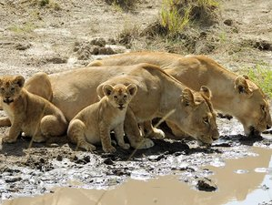 3 Days Wildlife Safari in Maasai Mara, Kenya