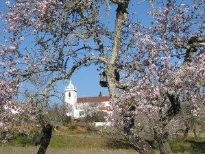 8 Tage Yoga Mandelblütenwoche in Lagoa, Portugal