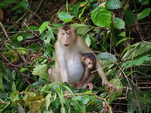 2 Day Wildlife Tour in Kinabatangan, Malaysia