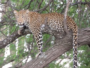 8 Days Tarangire, Serengeti, Ngorongoro, and Lake Manyara Safari in Tanzania