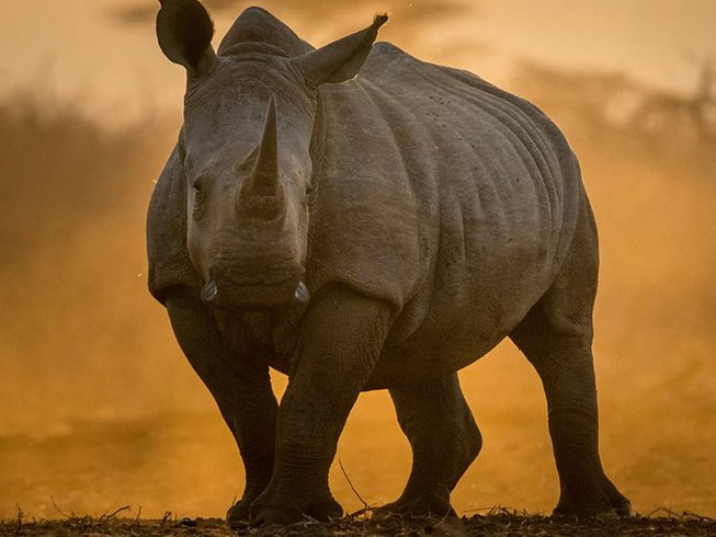 6 Days Photography Safari in South Africa