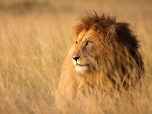 11 Days Private and Small Group Safari in South Africa, Zimbabwe, and Botswana