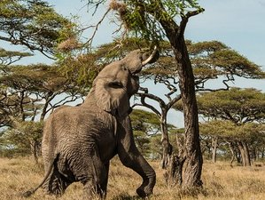 7 Days in Serengeti National Park and Ngorongoro Crater Safari