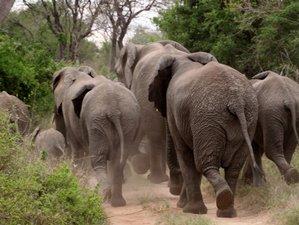 3 Days Big Cats and Great Migration Safari in Maasai Mara, Kenya