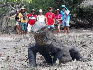 3 Day Safari Tour in Komodo National Park, Indonesia