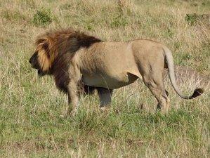 3 Days Stunning Safari in Maasai Mara National Reserve, Kenya