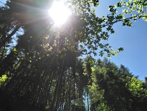 4 Day Tao Yoga and Forest Walking Meditation Retreat in Saint-Girons, Ariège