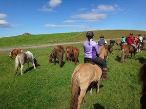 6 Day Viking Woman Trail Horseback Riding Holiday in Selfoss, Árborg