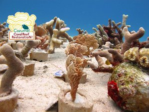 8 Days Yoga, Diving and Coral Restoration Holiday in Cozumel Island, Mexico