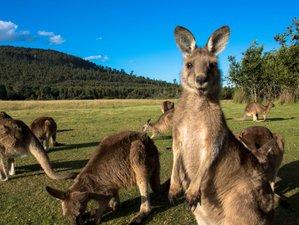 3 Day Private Tasmanian Wildlife Tour in Tasmania, Australia