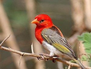 8 Days Great Birding Safari in Kenya