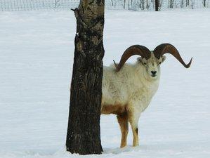 4 Days Aurora Viewing Wildlife Tour in Yukon, Canada