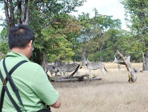 4 Days Boat Cruise and Safari Tour in Zambia and Botswana