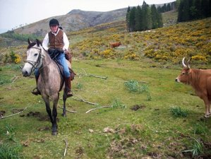 8 Days Adventurous Wild Horse Riding Tour in Alto Minho, Northern Portugal