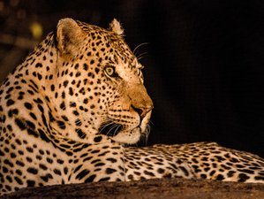 7 Days EcoQuest Safari in Kruger National Park, South Africa