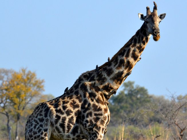5 Days Kruger National Park Safaris and Wildlife Tour
