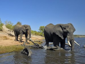5 Day Ladies Safari in Moremi Game Reserve
