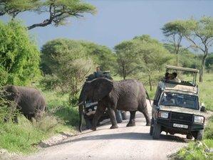 8 Days Tembo Safari in Tanzania