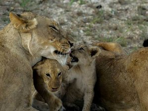 5 Days Guided Safari in Kruger National Park, South Africa