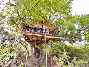 4 Days Lodge and Treehouse Safari in Balule Nature Reserve and Kruger National Park, South Africa
